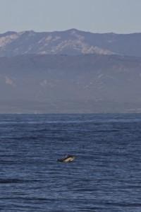 Dolphins DGAF!