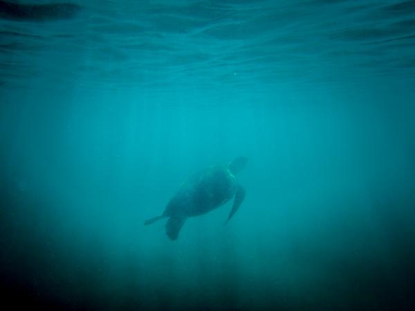 Bye bye, turtle.