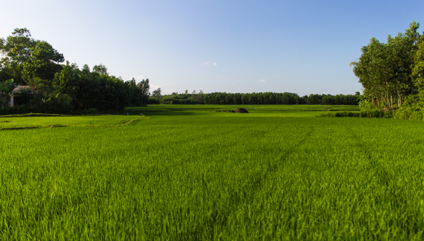 Impossibly green. That is the only way to describe the countryside outside of Hoi An.